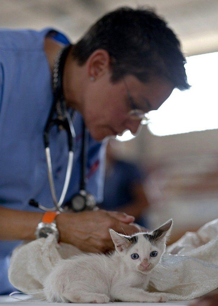 Find din lokale dyreklinik i Værløse